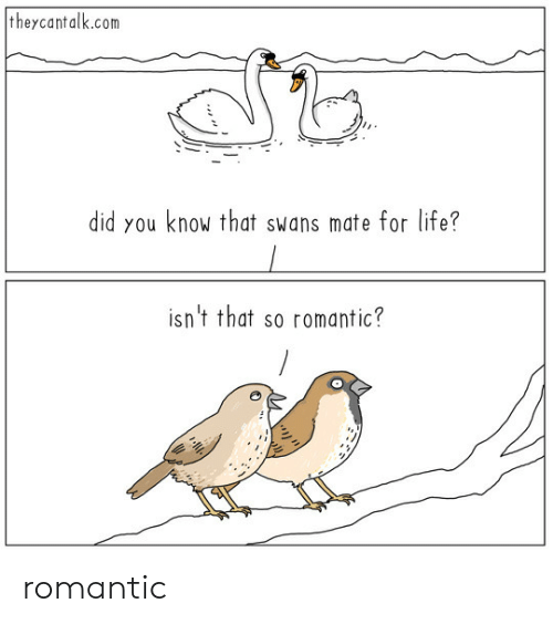 swans: theycantalk.com  did you know that swans mate for life?  isn't that so romantic? romantic