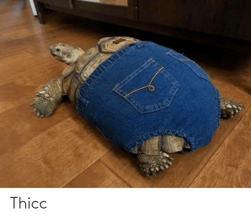 thicc: Thicc