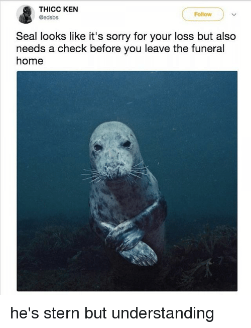 Ken, Sorry, and Home: THICC KEN  @edsbs  Follow  Seal looks like it's sorry for your loss but also  needs a check before you leave the funeral  home he's stern but understanding