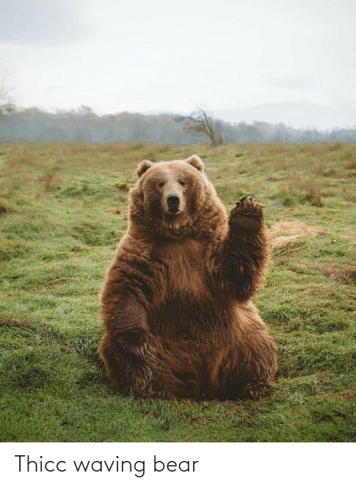 thicc: Thicc waving bear