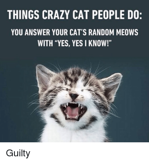 """crazy cats: THINGS CRAZY CAT PEOPLE DO:  YOU ANSWER YOUR CAT'S RANDOM MEOWS  WITH """"YES, YES I KNOW!"""" Guilty"""