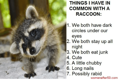 circling: THINGS I HAVE IN  COMMON WITH A  RACCOON:  1. We both have dark  circles under our  eyes  2. We both stay up all  night  3. We both eat junk  4. Cute  5. A little chubby  6. Long nails  7. Possibly rabid  women after50.com