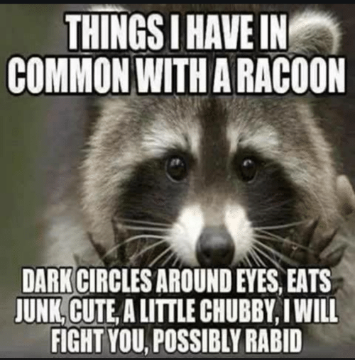 chubby: THINGS I HAVE IN  COMMON WITH A RACOON  DARK CIRCLES AROUND EYES, EATS  JUNK, CUTE, A LITTLE CHUBBY, I WILL  FIGHT YOU, POSSIBLY RABID