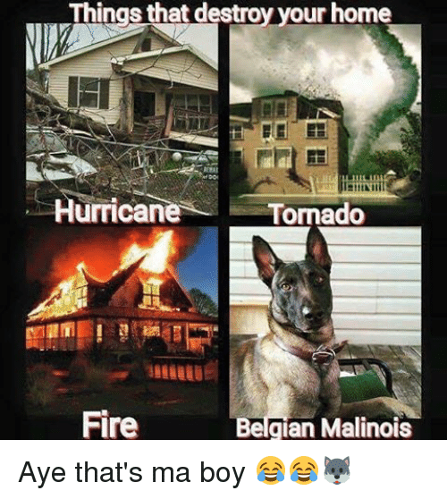 things that destroy your home hurricane tornado fire belgian malinois 8525101 things that destroy your home hurricane tornado fire belgian