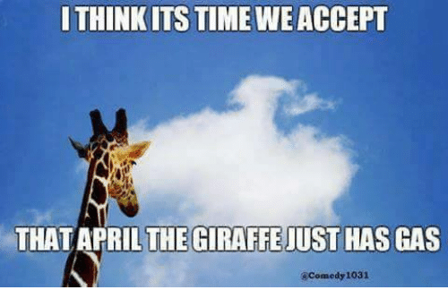 Memes, 🤖, and Think: THINK ITS TIME WEACCEPT  THAT APRIL THE GIRAFFE JUST HAS GAS  Comedy 1031