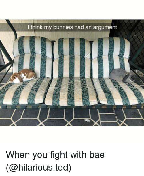 withings: think my bunnies had an argument When you fight with bae (@hilarious.ted)