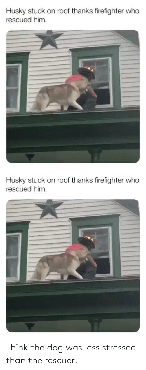 Less: Think the dog was less stressed than the rescuer.