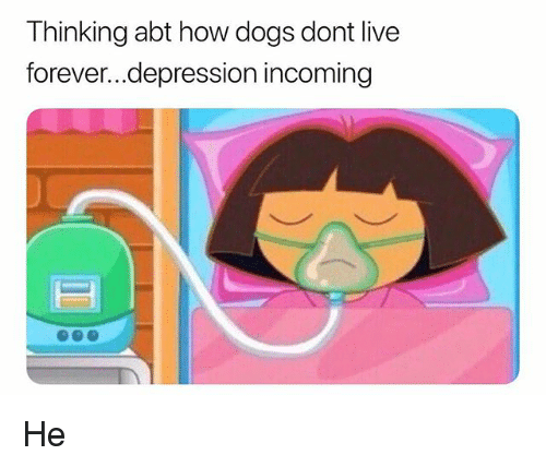 Dogs, Depression, and Forever: Thinking abt how dogs dont live  forever...depression incoming He