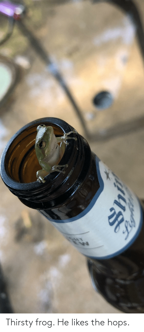 hops: Thirsty frog. He likes the hops.
