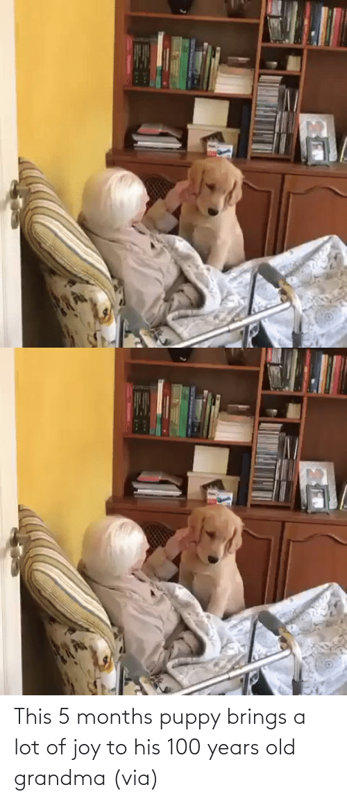 A Lot: This 5 months puppy brings a lot of joy to his 100 years old grandma (via)