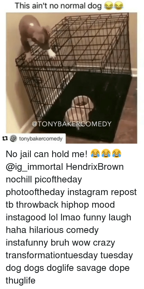 Bruh, Crazy, and Dogs: This ain't no normal dog  @TONYBAKERCOMEDY  1 tonybakercomedy No jail can hold me! 😂😂😂 @ig_immortal HendrixBrown nochill picoftheday photooftheday instagram repost tb throwback hiphop mood instagood lol lmao funny laugh haha hilarious comedy instafunny bruh wow crazy transformationtuesday tuesday dog dogs doglife savage dope thuglife