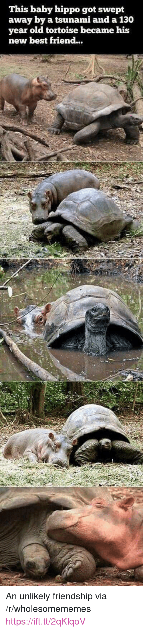 """Baby Hippo: This baby hippo got swept  away by a tsunami and a 130  year old tortoise became his  new best friend... <p>An unlikely friendship via /r/wholesomememes <a href=""""https://ift.tt/2qKlqoV"""">https://ift.tt/2qKlqoV</a></p>"""