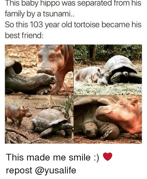 Baby Hippo: This baby hippo was separated from his  family by a tsunami..  So this 103 year old tortoise became his  best friend: This made me smile :) ❤ repost @yusalife