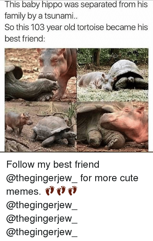 Baby Hippo: This baby hippo was separated from his  family by a tsunami.  So this 103 year old tortoise became his  best friend: Follow my best friend @thegingerjew_ for more cute memes. 👣👣👣 @thegingerjew_ @thegingerjew_ @thegingerjew_