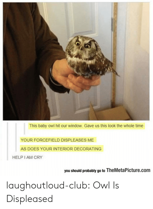 decorating: This baby owl hit our window. Gave us this look the whole time  YOUR FORCEFIELD DISPLEASES ME  AS DOES YOUR INTERIOR DECORATING  HELP I AM CRY  you should probably go to TheMetaPicture.com laughoutloud-club:  Owl Is Displeased
