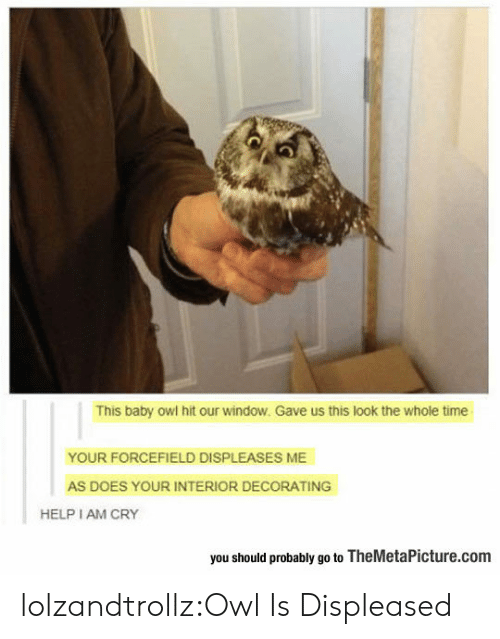 decorating: This baby owl hit our window. Gave us this look the whole time  YOUR FORCEFIELD DISPLEASES ME  AS DOES YOUR INTERIOR DECORATING  HELP I AM CRY  you should probably go to TheMetaPicture.com lolzandtrollz:Owl Is Displeased