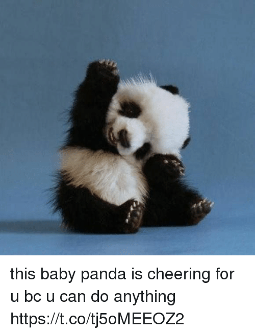 Panda, Girl Memes, and Baby: this baby panda is cheering for u bc u can do anything https://t.co/tj5oMEEOZ2