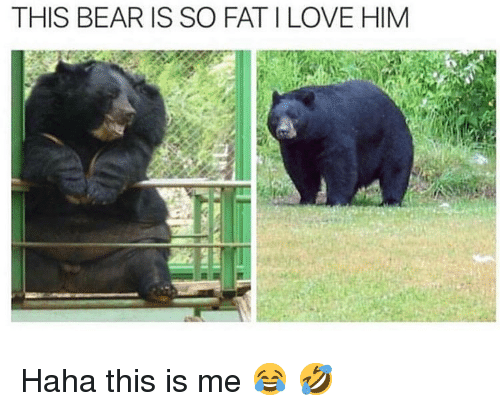 So Fat: THIS BEAR IS SO FAT I LOVE HIM Haha this is me 😂 🤣