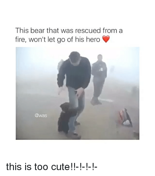 Cute, Fire, and Bear: This bear that was rescued from a  fire, won't let go of his hero  @was this is too cute!!-!-!-!-