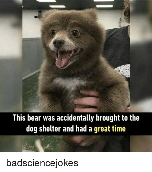 Memes, Bear, and Time: This bear was accidentally brought to the  dog shelter and had a great time badsciencejokes