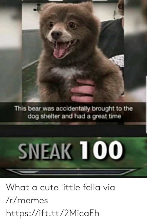 Fella: This bear was accidentally brought to the  dog shelter and had a great time  SNEAK 100 What a cute little fella via /r/memes https://ift.tt/2MicaEh