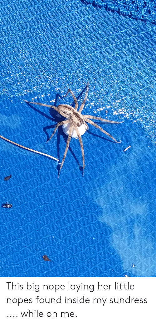 Nopes: This big nope laying her little nopes found inside my sundress .... while on me.