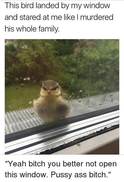 """Ass, Bitch, and Family: This bird landed by my window  and stared at me like I murdered  his whole family. """"Yeah bitch you better not open this window. Pussy ass bitch."""""""