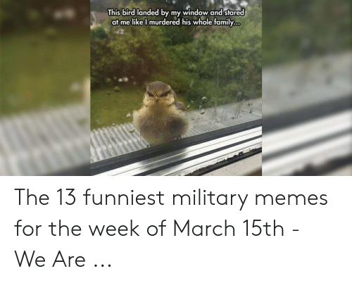 13 Funniest: This bird landed by my window and stared  at me likel murdered his whole family... The 13 funniest military memes for the week of March 15th - We Are ...