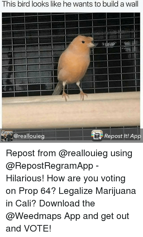 get-out-and-vote: This bird looks like he wants to build a wall  @reallouieg  Repost It! App Repost from @reallouieg using @RepostRegramApp - Hilarious! How are you voting on Prop 64? Legalize Marijuana in Cali? Download the @Weedmaps App and get out and VOTE!