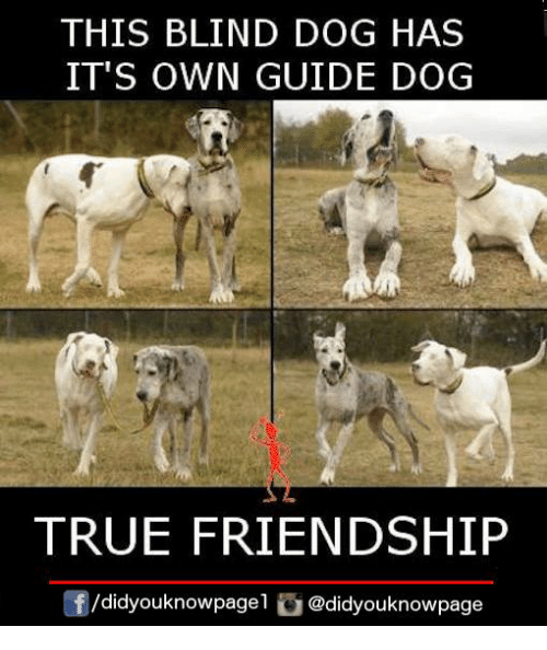 25 Best Memes About Guide Guide Memes