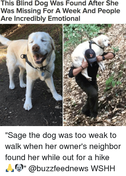 """Memes, Neighbors, and Sage: This Blind Dog Was Found After She  Was Missing For A Week And People  Are Incredibly Emotional """"Sage the dog was too weak to walk when her owner's neighbor found her while out for a hike 🙏🐶"""" @buzzfeednews WSHH"""
