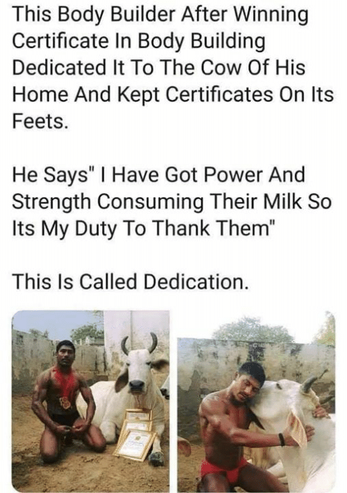 """feets: This Body Builder After Winning  Certificate In Body Building  Dedicated It To The Cow Of His  Home And Kept Certificates On Its  Feets.  He Says' I Have Got Power And  Strength Consuming Their Milk So  Its My Duty To Thank Them""""  This Is Called Dedication."""