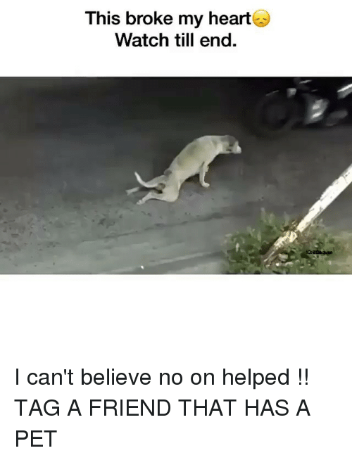 Funny, Heart, and Watch: This broke my heart  Watch till end. I can't believe no on helped !! TAG A FRIEND THAT HAS A PET