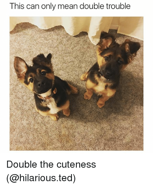 Funny, Ted, and Mean: This can only mean double trouble Double the cuteness (@hilarious.ted)