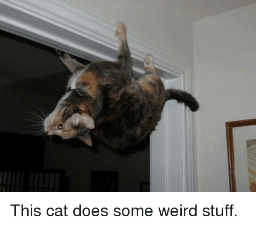memes: This cat does some weird stuff.