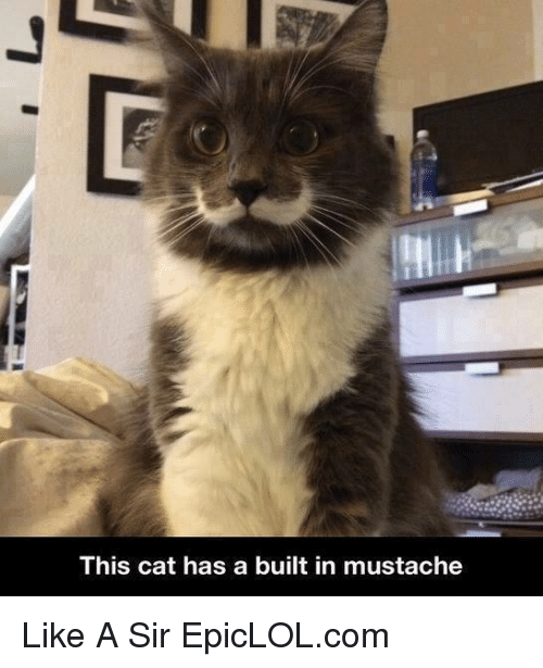 Like A Sir: This cat has a built in mustache Like A Sir  EpicLOL.com