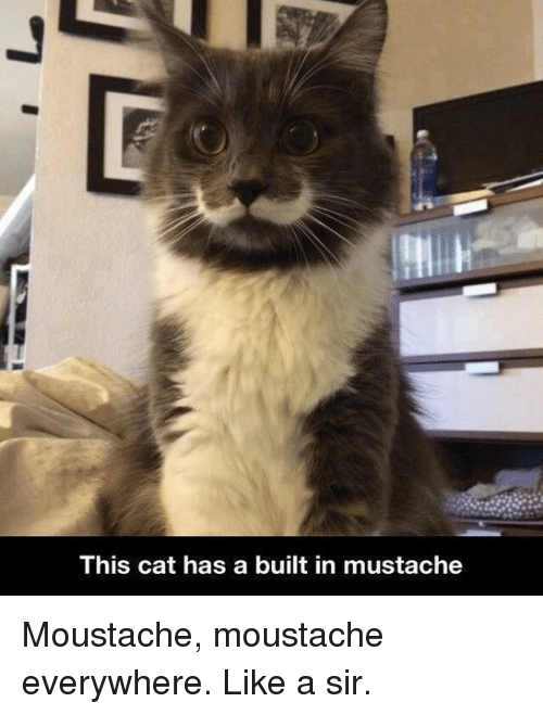 Like A Sir: This cat has a built in mustache Moustache, moustache everywhere. Like a sir.