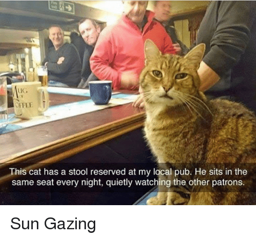 Pub: This cat has a stool reserved at my local pub. He sits in the  same seat every night, quietly watching the other patrons. Sun Gazing