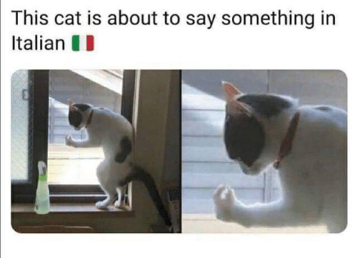 About To Say Something: This cat is about to say something in  Italian