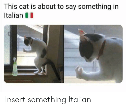 About To Say Something: This cat is about to say something in  Italian Insert something Italian