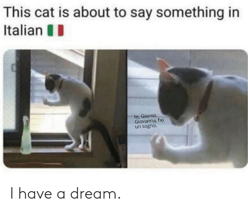 About To Say Something: This cat is about to say something in  Italian  lo, Giorno  Giovanna, ho  un sogno. I have a dream.