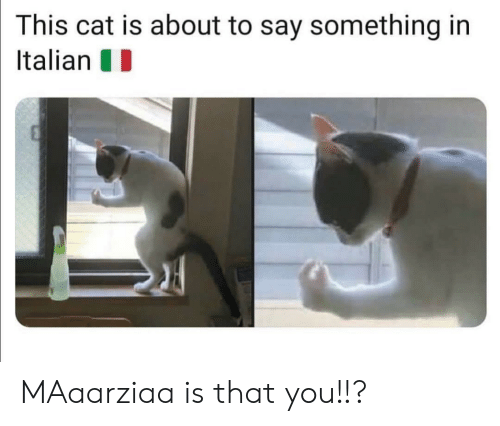About To Say Something: This cat is about to say something in  Italian MAaarziaa is that you!!?