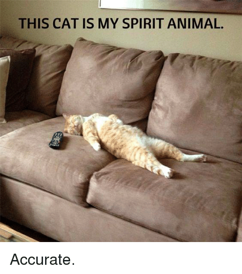 Cats, Memes, and Spirit: THIS CAT IS MY SPIRIT ANIMAL. Accurate.
