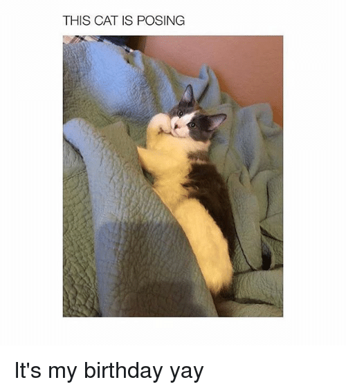 Girl Memes: THIS CAT IS POSING It's my birthday yay