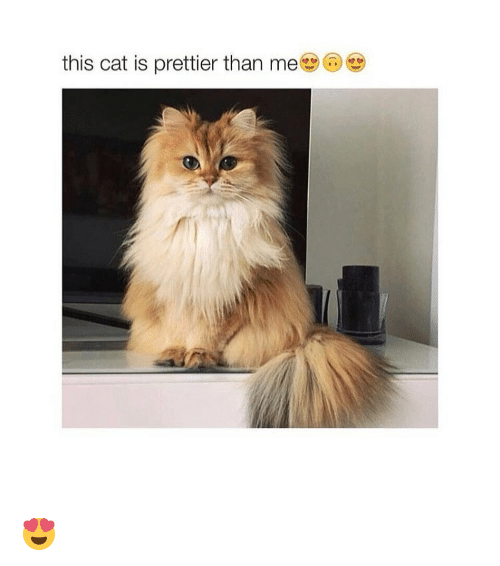 memes: this cat is prettier than me 😍