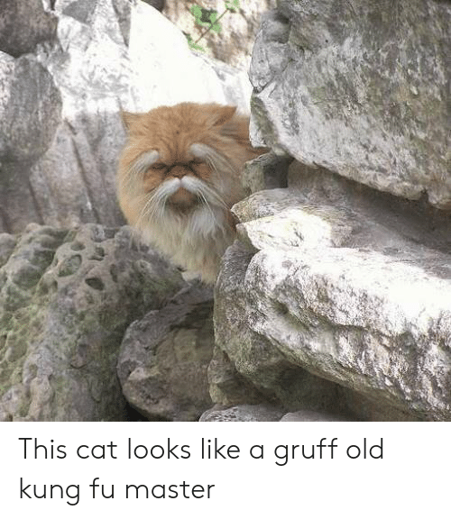 kung fu master: This cat looks like a gruff old kung fu master