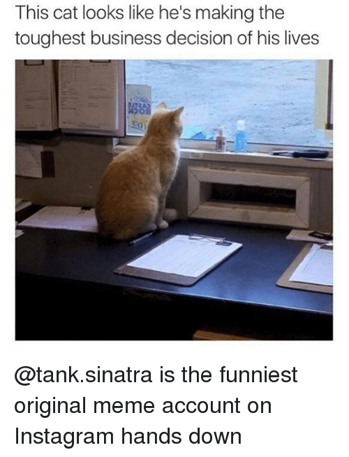 Origin Meme: This cat looks like he's making the  toughest business decision of his lives @tank.sinatra is the funniest original meme account on Instagram hands down