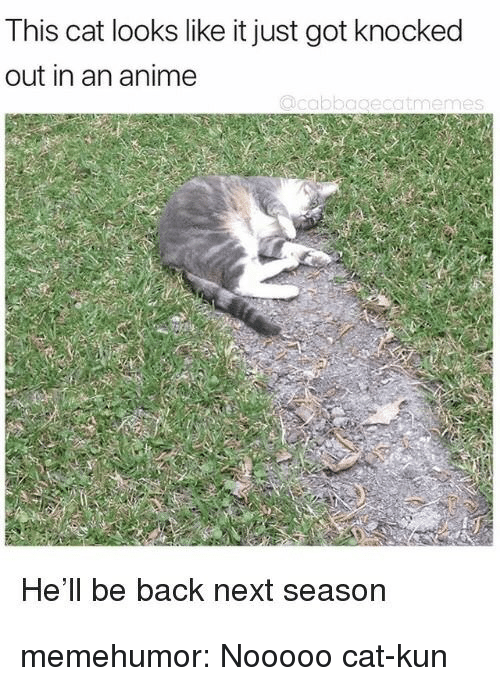 nooooo: This cat looks like it just got knocked  out in an anime  He'll be back next season memehumor:  Nooooo cat-kun