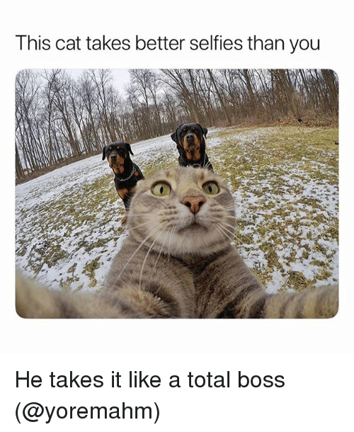 Funny, Cat, and Boss: This cat takes better selfies than you He takes it like a total boss (@yoremahm)