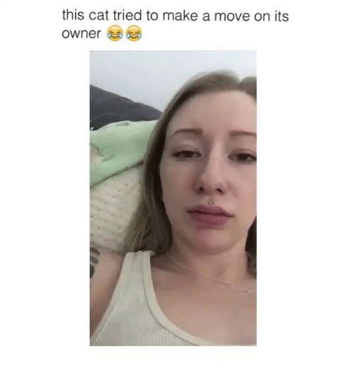 Funny, Moving On, and Move On: this cat tried to make a move on its  owner